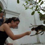 בעלי חיים וטבע בסרי לנקה