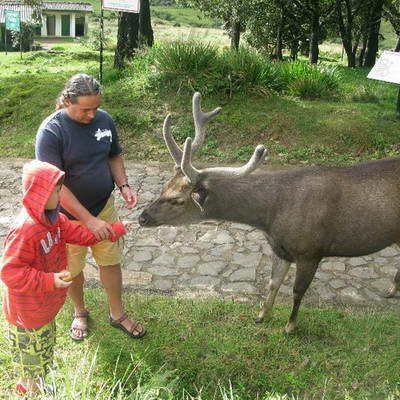 המלצה על טיול משפחות 14 המופלאים בסרילנקה